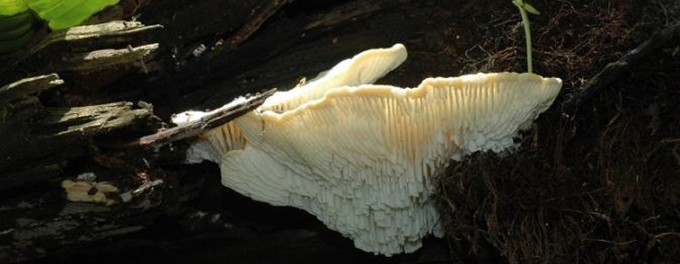Agro-food & environmental fungi