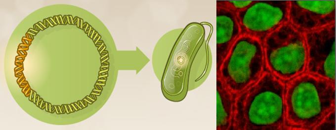 Plasmid hosts